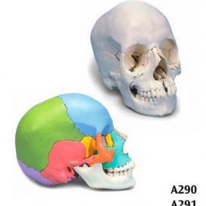 3B Skull 22part A290